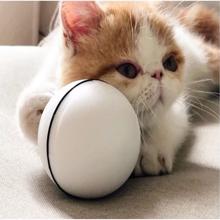cat holding ball
