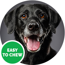 senior dog approved easy to chew black lab old white hair snout mouth open wildpaw hemp treats