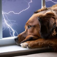 Help your dog through a thunderstorm or fireworks