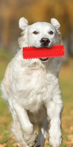 dog toys toy for dogs chew puppy large chewers aggressive tough squeaky breed plush stick stuffers