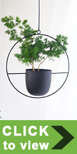 small hanging planter indoor