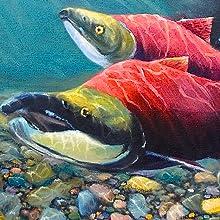 Sockeye salmon close up image