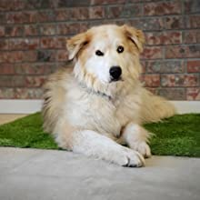 Artificial Grass for Dog