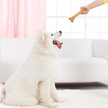 reward your pets