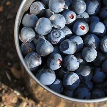 Whole fruit blueberry powder