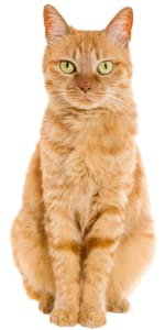 cat diabetic diabetes for cats diabetes medication for cats diabetes mellitus cats diabetic cat