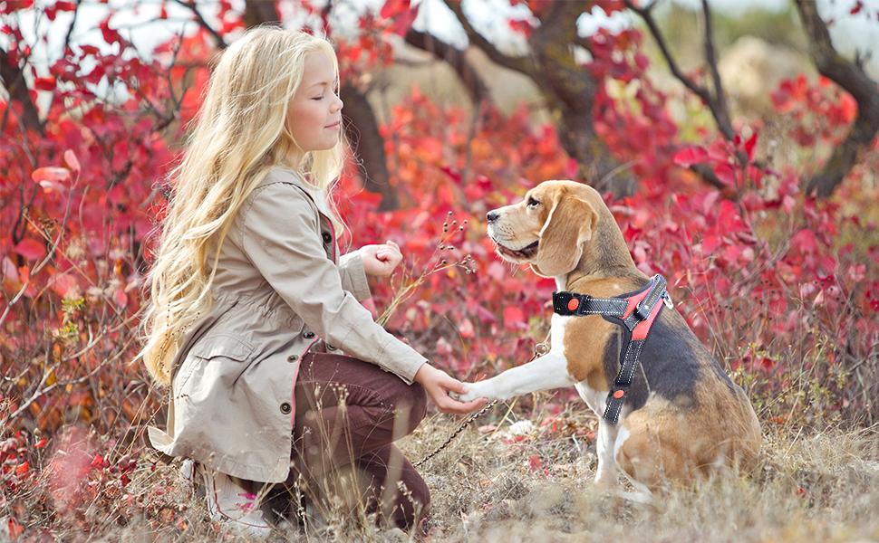 harnais chien, harnet, harné, harnais harnai, laisse chien, terres d'eden, jouet chien