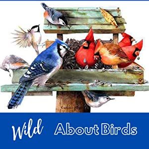wildbird gardening birdhouse bird house feeder bath yard art