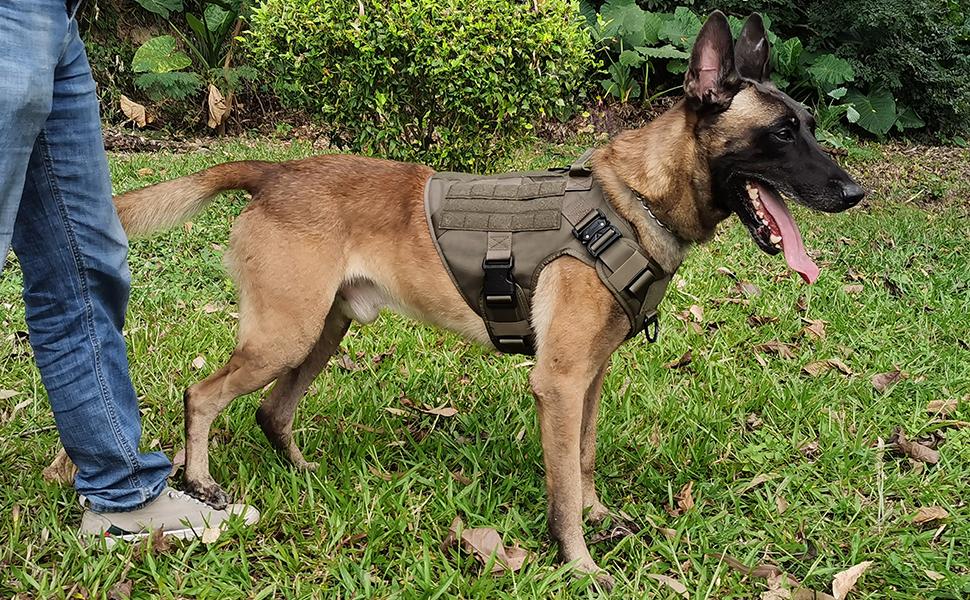 hunting dog harness