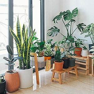 gnat trap indoor