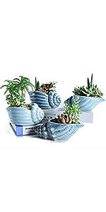 SUN-E 5.5 Inch Blue Conch Ocean Planters Pots Set