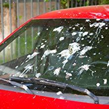 bird poop faeces animal car windscreen dirt dirty dust clean wash windshield snow frost