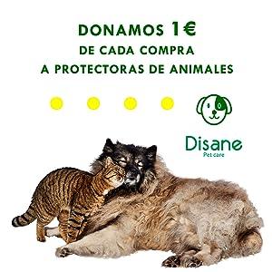 DISANE Champú Seco Gatos Natural 200ml | Espuma Lavado en Seco ...