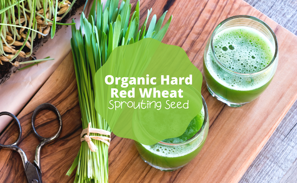 Organic Hard Red Wheat Sprouting Seed