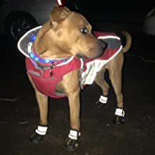dog shoes for night walking