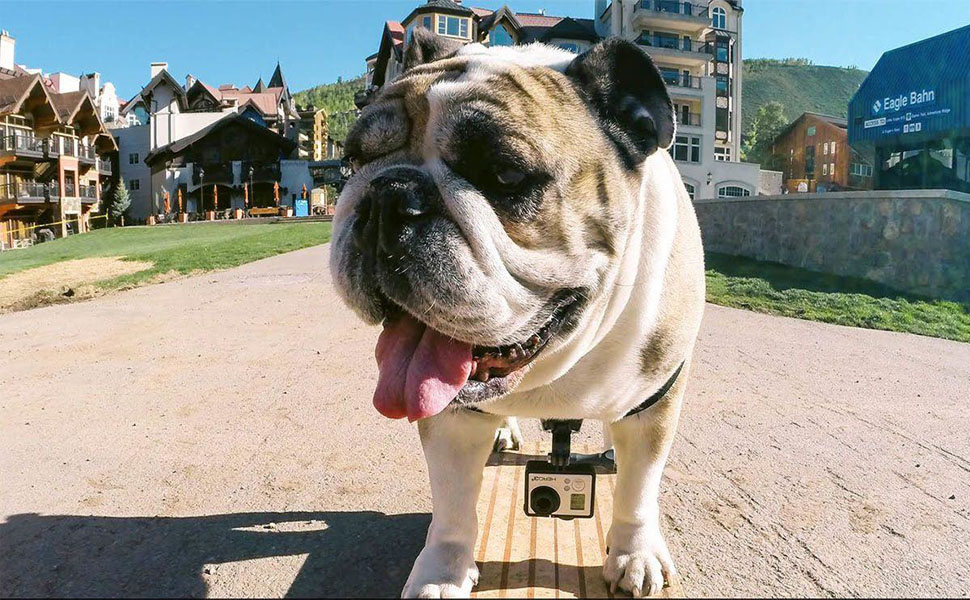 Mojosketch Dog Harness Mount Chest for GoPro Cameras