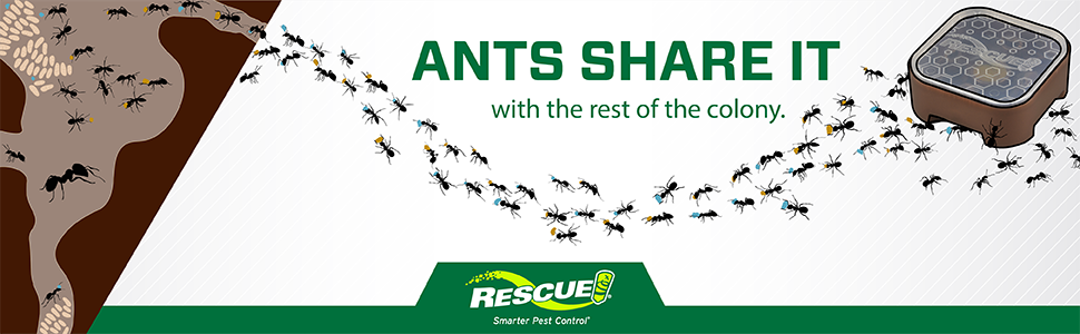 Ants share it with the rest of the colony.