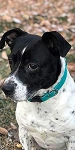 Quick Release Waterproof ScruffTag Dog Collar - Built-in Custom Engraved Nameplate, Odor Resistant