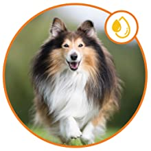 Supports Skin Moisture dog itching skin relief alaskan salmon oil for dogs dog pain relief