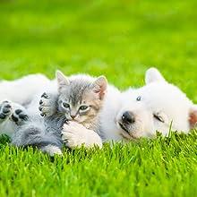 Pour chiens et chats