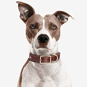Anxiety collar for dogs Anxiety for dogs Anti anxiety for dog Calming collar Dog collars for anxiety