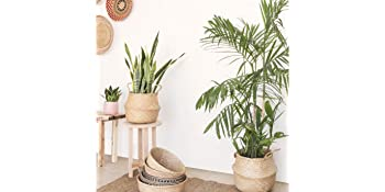 Plant Basket Indoor