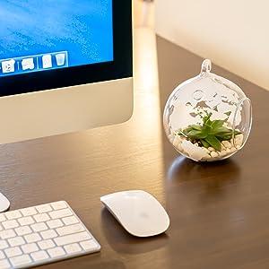 On a desk terrarium
