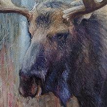 fall moose study close up web image