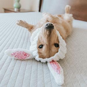 Amazon Com Zoo Snoods Dinosaur Dog Costume Neck And Ear Warmer Headband For Pets Large Pet Supplies