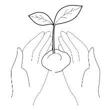 توضيح كبريتات الشامبو الحرة شامبو التفاح شراب التفاح sls منتجات مجانية نجاح باهر التفاح التفاح