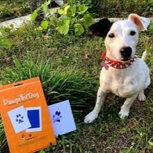 Badogshop Kit Empreinte Chien, Tampon Encreur Patte Chien Et Chat, Souvenir Tatouage (Pawprint'Dog)