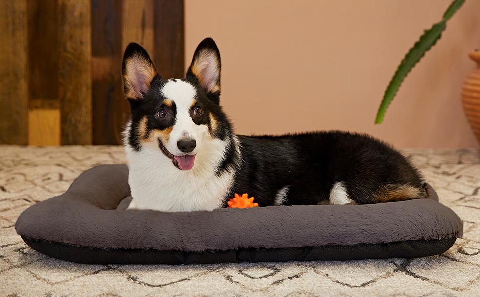 dog bed large dog
