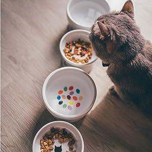 猫 猫壱 ハッピーダイニング