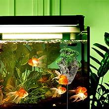 fish tank rocks decorations