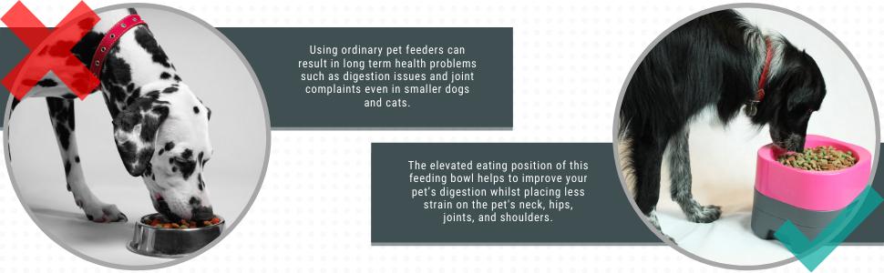elevated feeding bowls