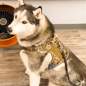 indoor dog harness 1