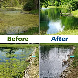 Pond Treatment Before and After