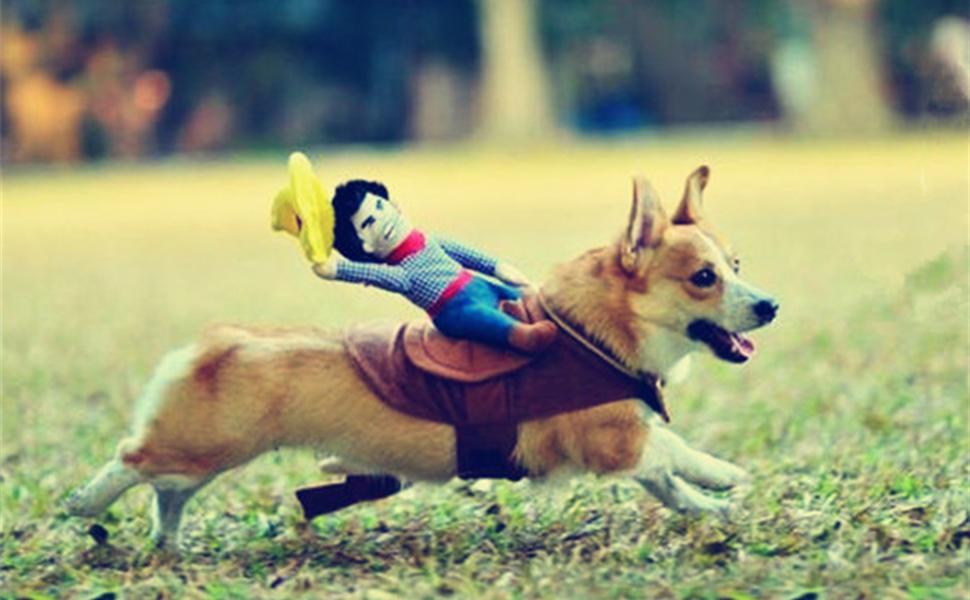 Dog rider costume