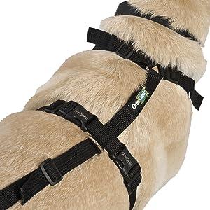Arnés canino Integral - L: Amazon.es: Productos para mascotas