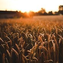 Nadanut Wheat Field
