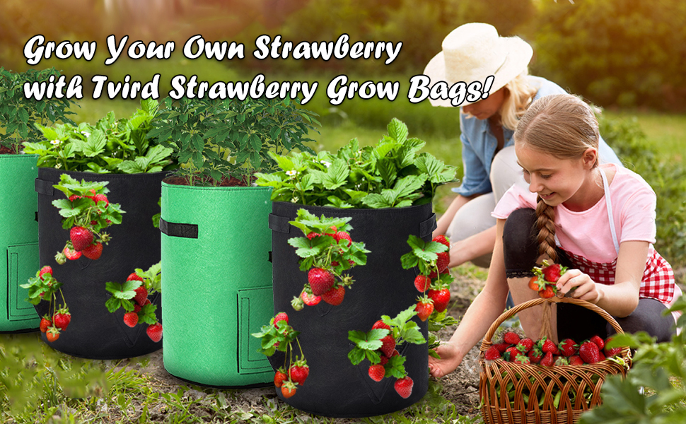 grow bags for strawberries
