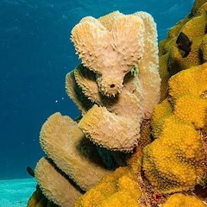 Constantia Beauty Natural Sea Silk Sponges