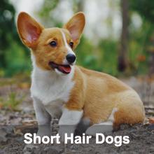 shedding brush for short hair dogs