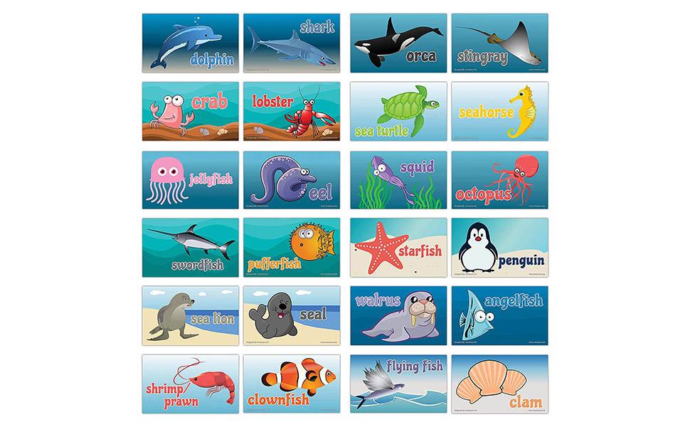 Sea Creature Note Cards