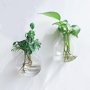 wall glass hanging terrarium planter