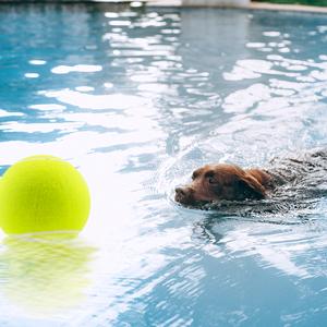 large tennis ball dog toy