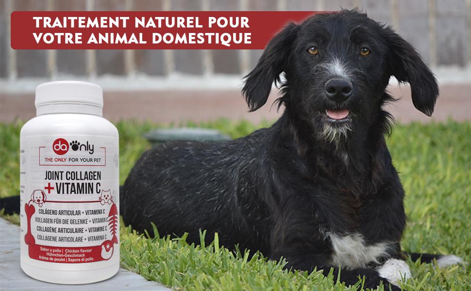 anti inflammatoire chien os pour chien arthrose chien vermifuge chien os le chien harpagophytum