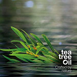 Tea Tree Oil Australian Bodycare