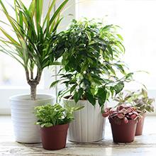 houseplant soil, organic potting soil, indoor plant soil,container garden, organic soil