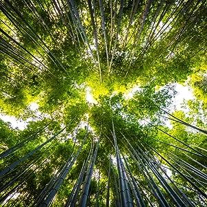 Bamboo Cutting Board Eco-conscious